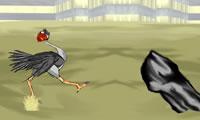 An ostrich Cool running 3